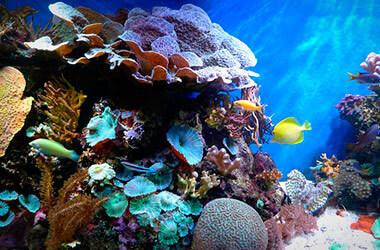 Koraal en vissen tijdens de Atlantis Adventure